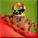 Pack 101 - Araignée