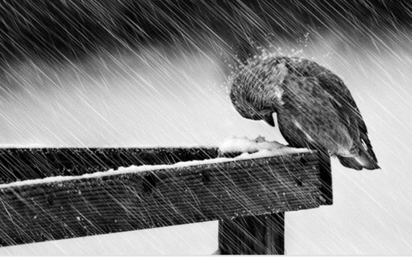 les petits oiseaux
