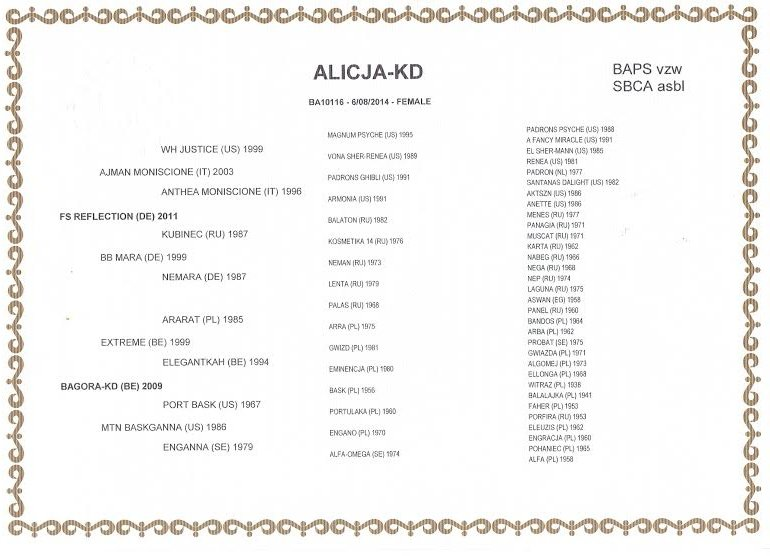 Aman pur sang arabe,Blondiné (Haflinger), Azul (Levrier) !  - Page 4 3295537196_2_3_F5jeVSFx