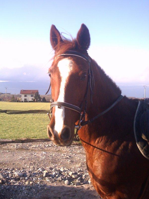 ♦ << Presente moi ton cheval ou ton préféré >>♦