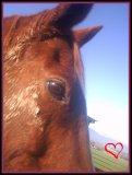 Photo de i-lOove-horsee