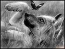 Photo de Fille-Wolfy