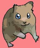 Photo de x-Wizz-Hamster