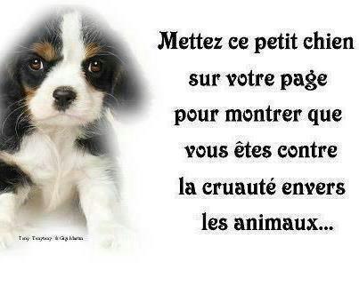 pour tout les animaux
