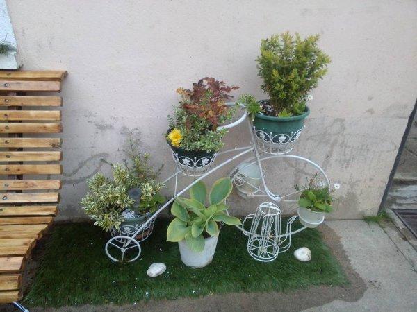 mes plantes exerrieur