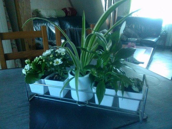 fleurs que mamans m'a offert