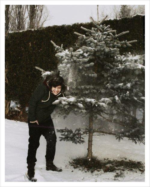 Harry et .... Un sapin ! :P