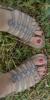 Les petits pieds d'alicia *Q* avis ?