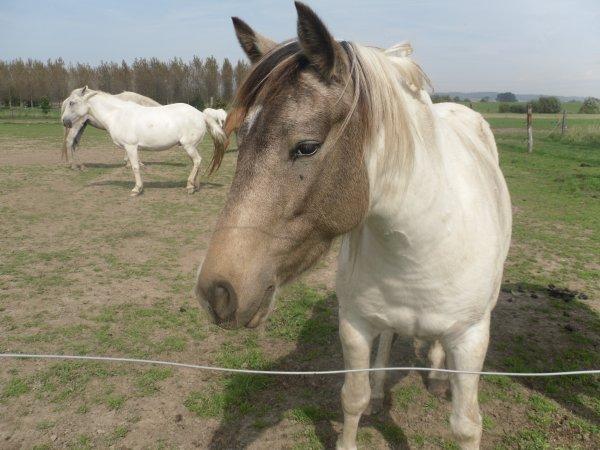 Qui va au salon du cheval ce samedi a Tournais??