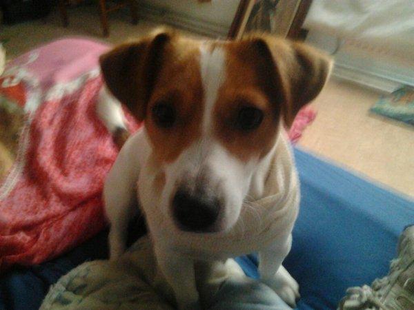 Qlq photos de Chipie (mon chien