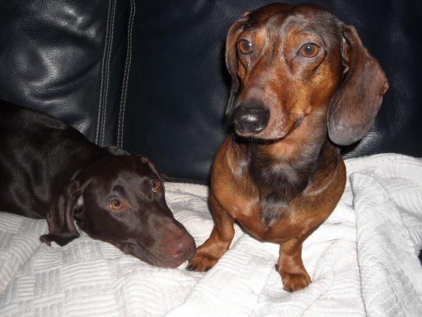 Gibbs et Anzo
