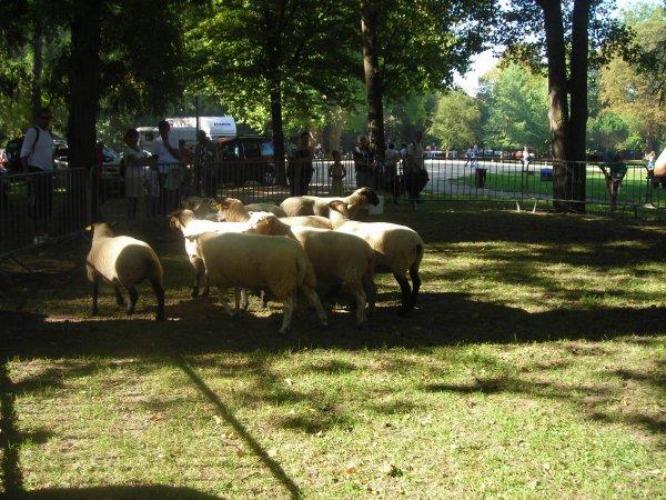Régioanale d'élevage à Isle Adam