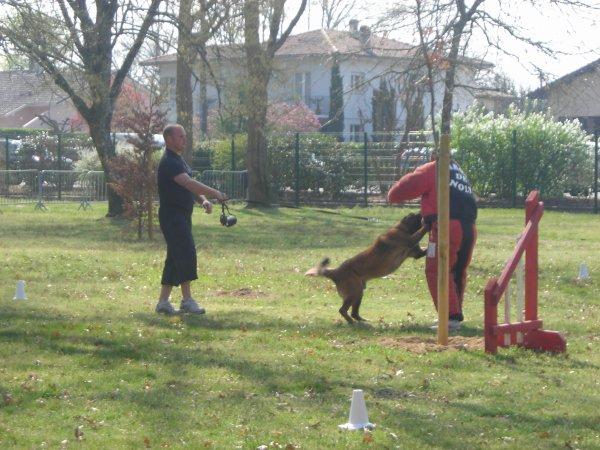 Démo de chien de sécurité