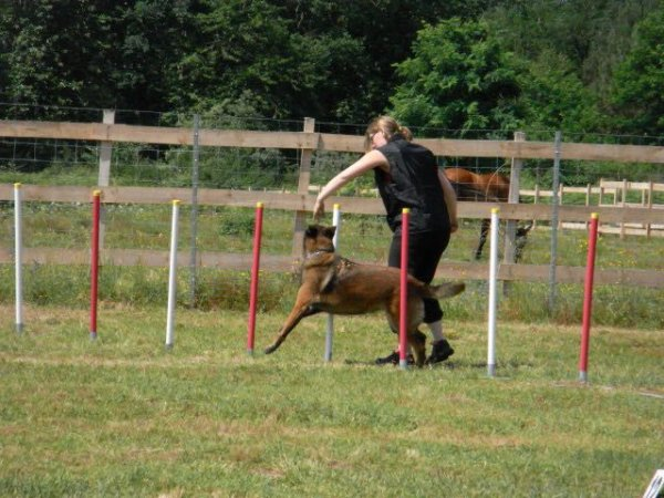 Paprika concours agility inter club