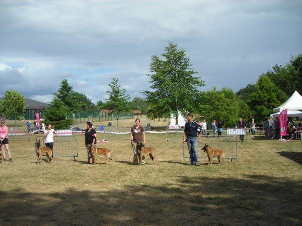 Natinale d'élevage du Berger Belge 2012 à Aubigny sur Nère