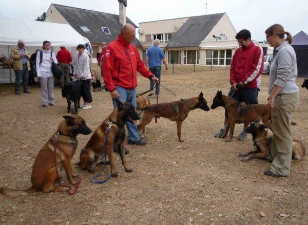 Nationale du berger belge à Aubigny sur nère 2012