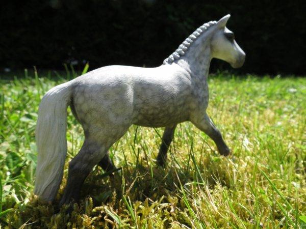 Sommaire des chevaux à vendre