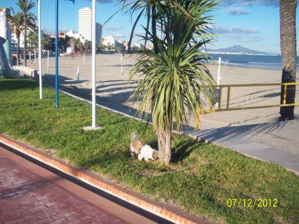 En bordure de l'esplanade  avec mon petit chien