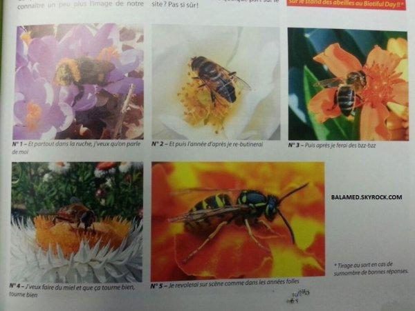 Détournée les textes d'un titre sur la réussite d'une abeille