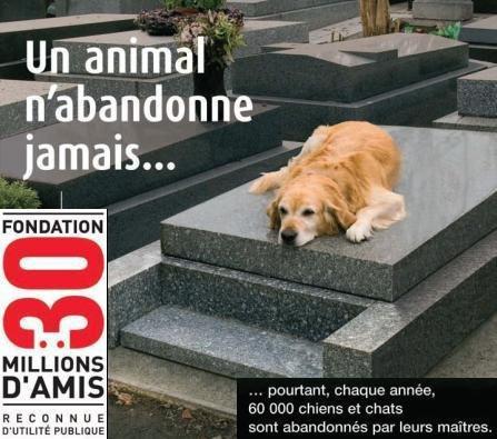 l'abandon des animaux