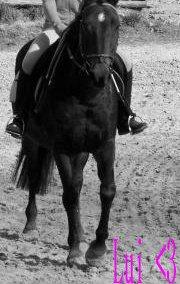 « Car aucun couple ne peu égaler la complicité du couple ; Cavalier / Cheval » ♥