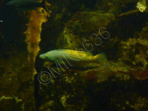 Aquarium de Saint-Malo (2011)