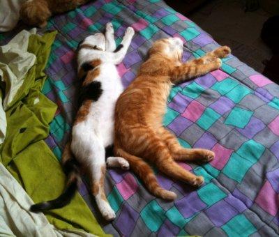 Histoires de Chats