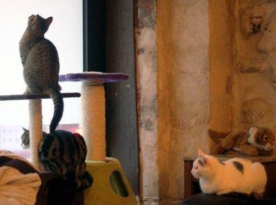Le café des chat