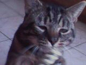 Mon petit chat <3