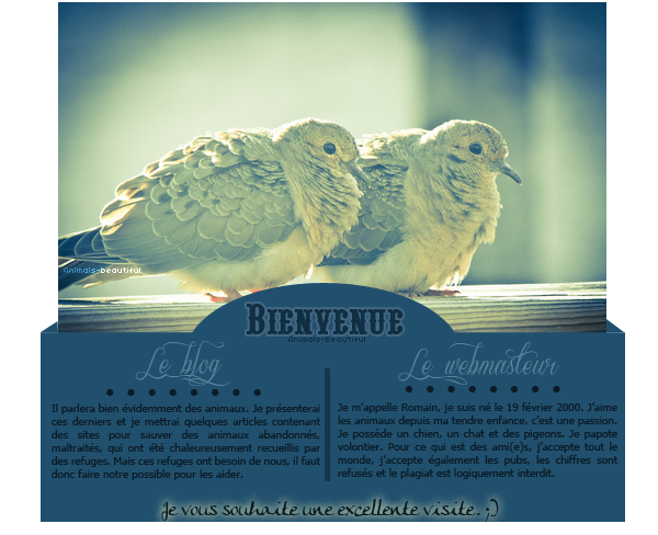 Article 1 : Bienvenue sur Animals-beautifulNourris un animal abandonné