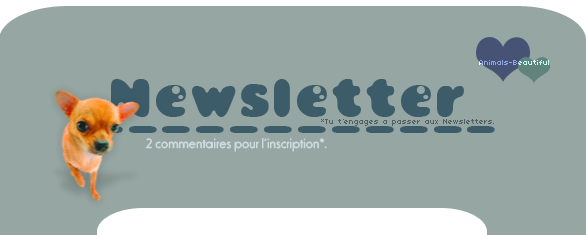 Article 2 : Newsletter sur Animals-beautifulNourris un animal abandonné