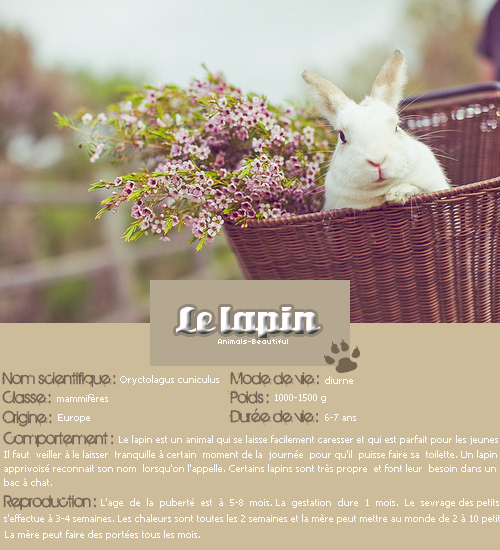 Article 6 : Le lapin sur Animals-beautifulNourris un animal abandonné