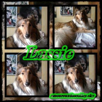 Ma Lassie...
