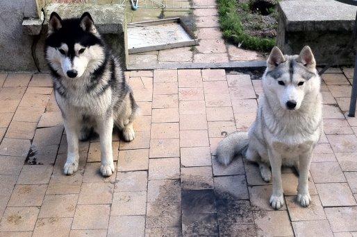 Luna et Juri