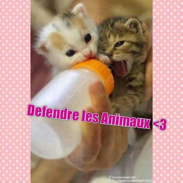 Defendre et proteger les animaux ♥♥♥