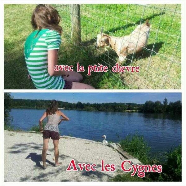 Les animaux ♥♥♥