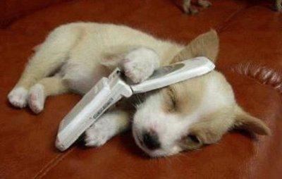 chien appelle
