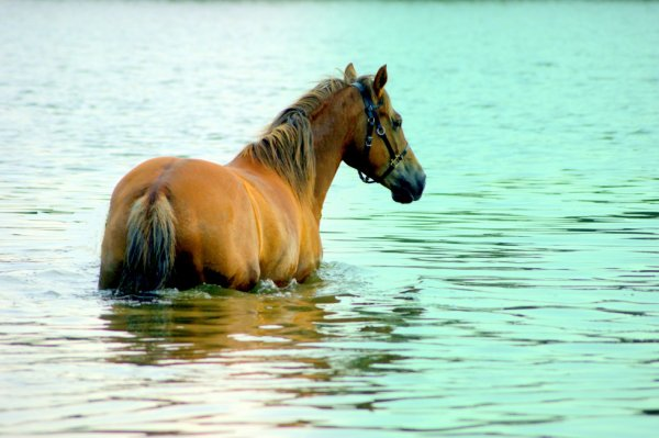 j'adore l'eau