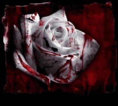 """l'origine de la rose de """"l'amour"""""""