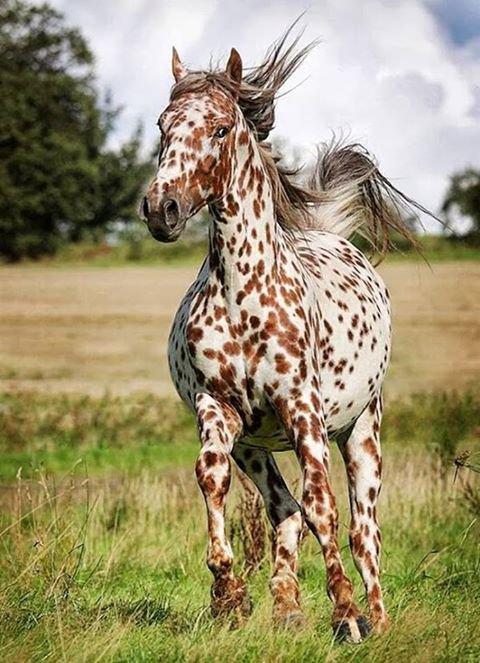 joli cheval