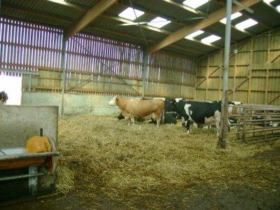 les laitieres
