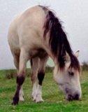 Photo de Les-chevaux-rare