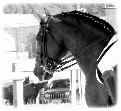 Je sors en concours ! Comment pionter mon cheval?