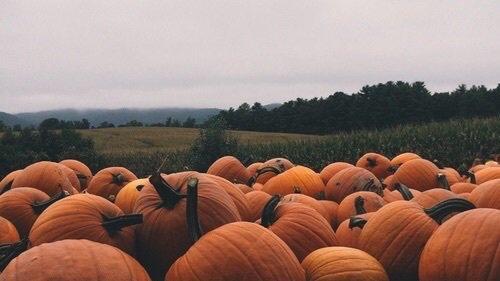 Tag : Halloween