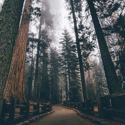 Le chemin se construit en marchant,...