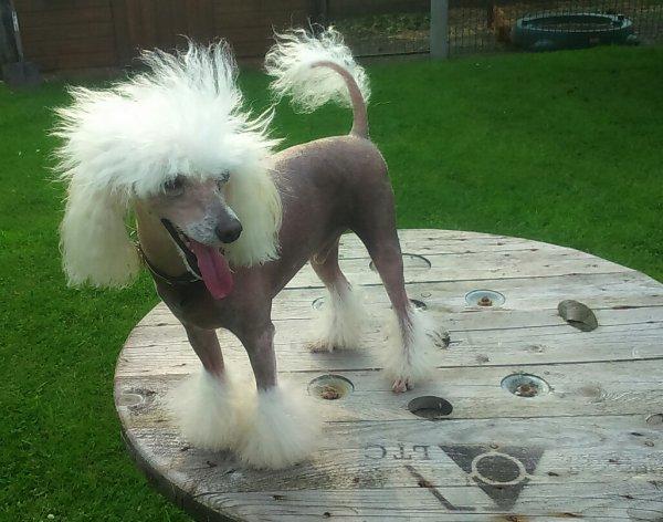 En mode chien nu chinois !