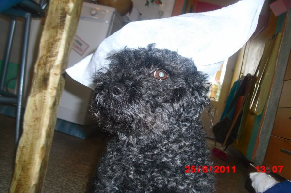 moi à la maternitè et mon chien  qui fait le pitre sacrè BEN