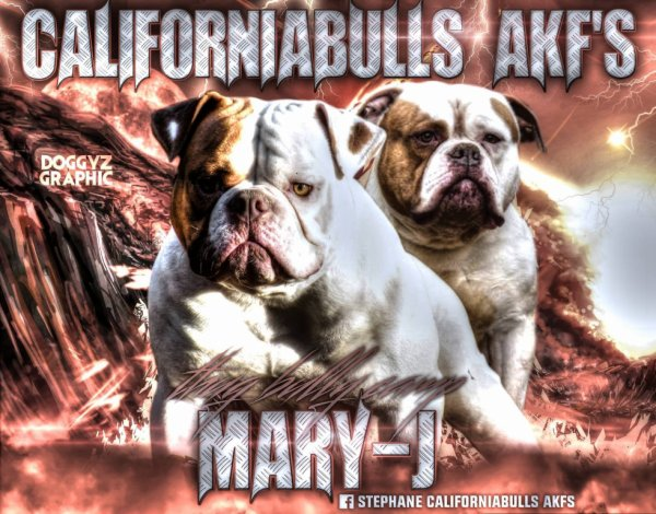 thug bully camp mary-j et megabull fifty the legende