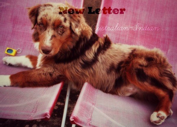 News Letters ♥~