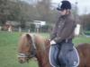 horsealisonlove
